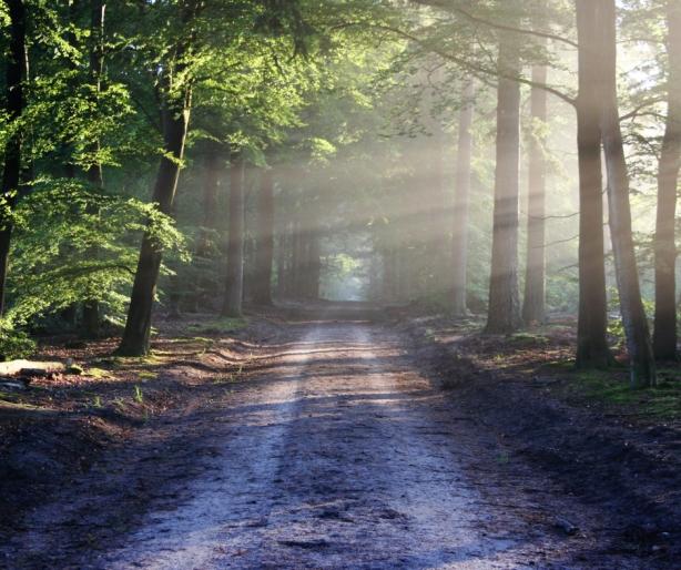 Rest Path